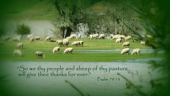 sheep-grazing-scripture-art-cindy-wright